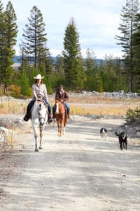 How to Safely Horseback Ride with Dogs
