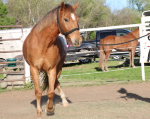 How to Get Your Horse to Engage Their Hind-End | Equine Helper