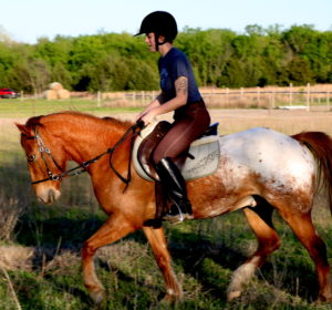 Stop Your Horse From Grazing While Riding | Equine Helper