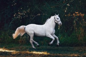 Natural Remedies for Horses that Actually Work | Equine Helper