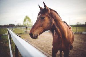 Natural Remedies for Horses that Actually Work