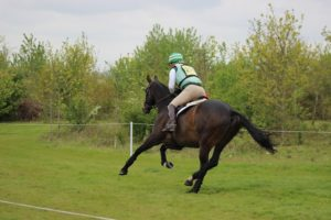 English Horseback Riding Disciplines