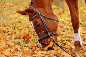 How to Stop Your Horse From Grazing While Riding | Equine Helper