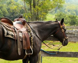 Western Horseback Riding | Equine Helper