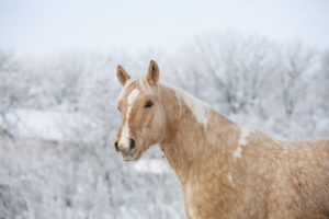 Is my horse to cold?