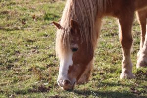How to Train a Horse to Stop Grazing | Equine Helper