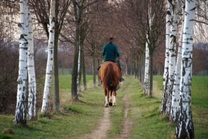 Keep Your Horse From Grazing While Riding
