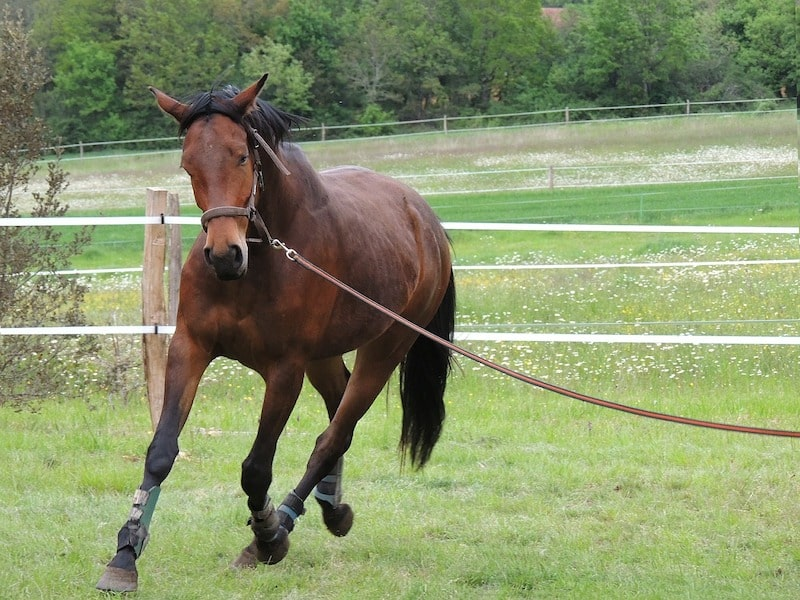 How to Stop Your Horse From Eating While Riding | Equine Helper