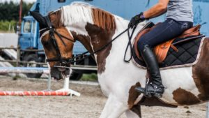 How to Get Your Horse to Pay Attention | Equine Helper
