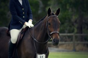 Different Types of English Horseback Riding | Equine Helper