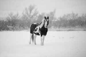 Tell if your horse is cold