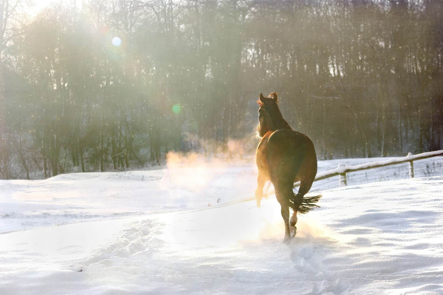 How Can I Tell if My Horse is Cold?