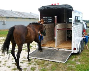 Guide to Safely traveling with a horse