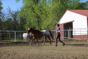 Horse Riding Tips and tricks for beginners