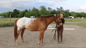 Beginner Groundwork Exercise Horseback Rider