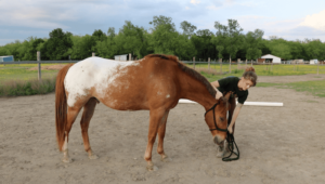 Groundwork Guide for new Horseback Rider