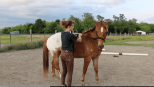Horse Beginner Groundwork Exercise