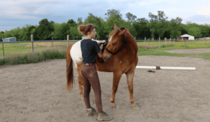 Groundwork Tip for Beginners Horseback Riding