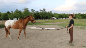 Horse Groundwork Tips for Beginner