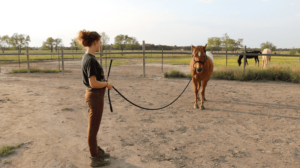 Groundwork Tips for Beginner Horseback Riding