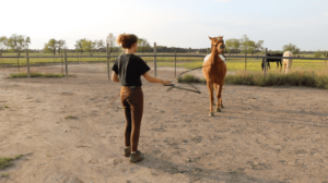 Beginners Groundwork Exercise Horseback Rider