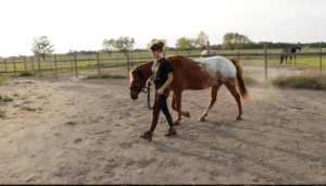 Beginners Groundwork Exercise Horseback Riding