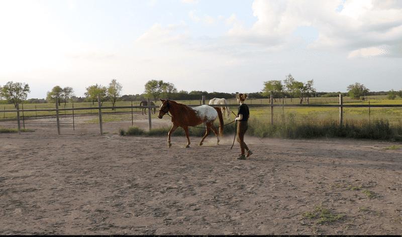 Beginner Groundwork Exercises Horseback Riding