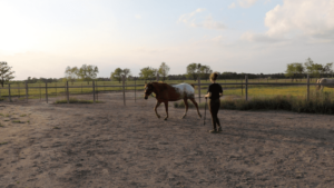 Horse Beginners Groundwork Exercise