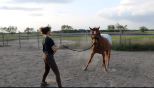 Horse Groundwork Tip for Beginners
