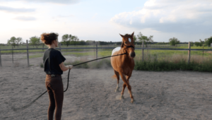 Groundwork Guide for Beginner Horseback Riding