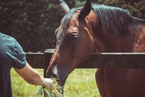 How to own a horse on a budget