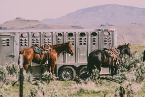Travel with horses for beginners