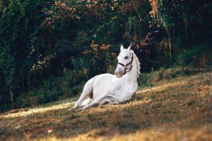 Safe horseback riding