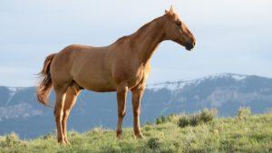 Beginner horse safety training