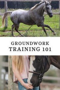 Horse Groundwork Exercises