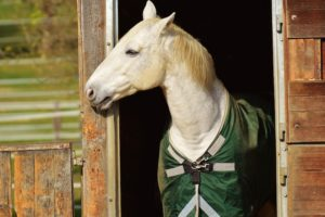 What Gear Do You Need for Horseback Riding | Equine Helper
