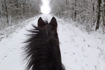 Tips for Winter Horse Care