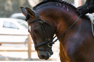 Horse Injuries and How to Treat Them