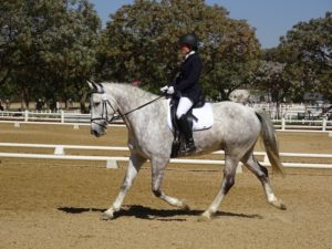 Horseback Riding for Beginners | Equine Helper