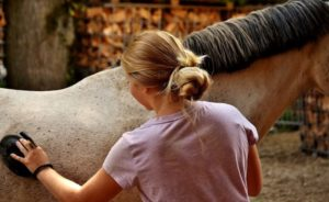 Safe horse grooming