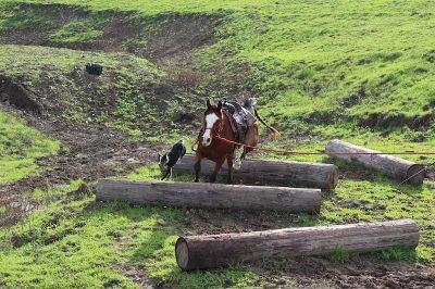 horses-2888749_1280-min 2