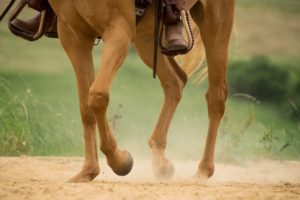 Common Horse Injuries and How to Treat Them | Equine Helper