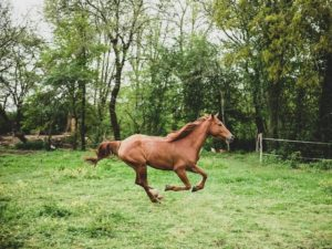 Common Horse Injuries | Equine Helper