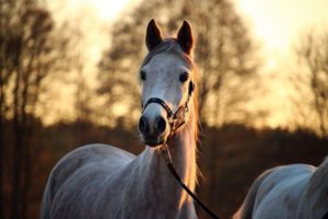 Tips for how to be safe with horses