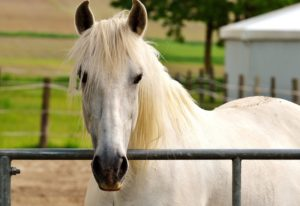 Tips For Beginner Horse Riders | Equine Helper