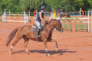 Tips for Beginner Horseback Riders | Equine Helper