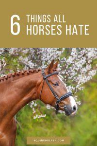 Things That Horses Don't Like