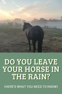 Leaving Horses In The Rain: What You Need To Know