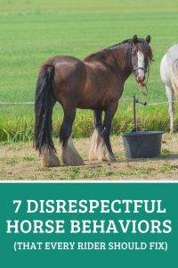 Disrespectful Horse Behaviors Training Guide