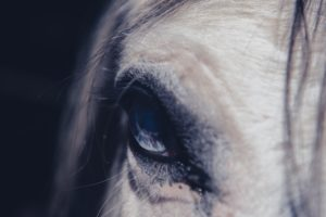 The Best Horse Quotes Picked By An Actual Equestrian